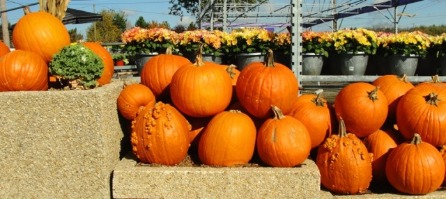 National Pumpkin Day, Pumpkins, Gourds, Pumpkin Spice, San Joaquin
