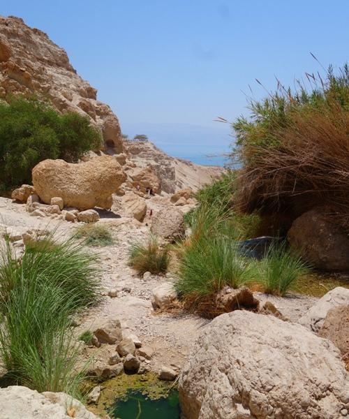 Ein Gedi, waterfalls, Israel, oasis, David, Dead Sea