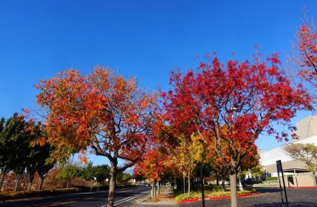 fall, autumn, trees, dublin, california, California fall