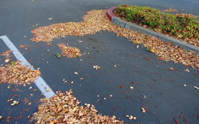 parking lot, leaves, fall, autumn
