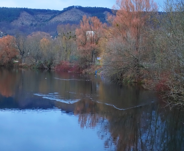 ducks, mallards, Saale River, Jena, Germany