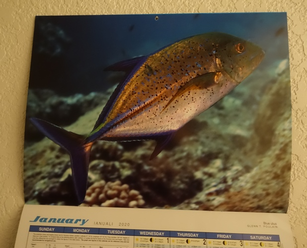 fish calendar, hawaii calendar, 2020