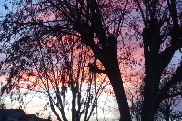 trees, silhouete, pink sunset, colorful sunset