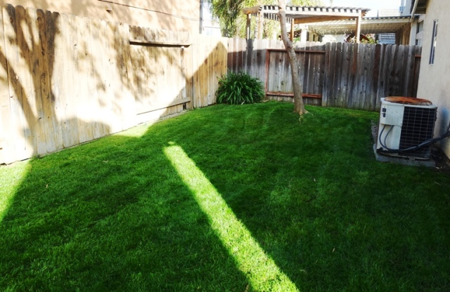 mowing, backyard, yard work, green grass