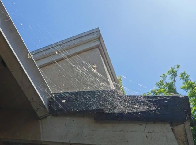 spider web, roof line, shingle, backyard