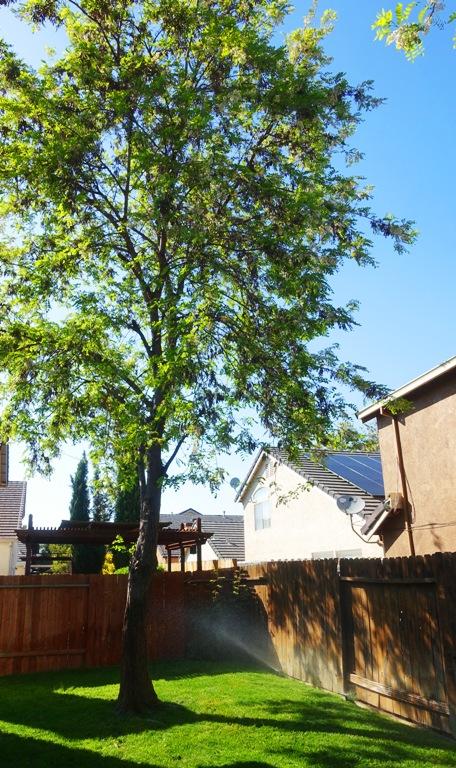 backyard, sprinklers, watering, green grass
