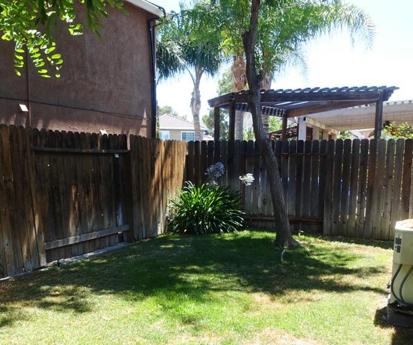 backyard, agapanthus, summer, yardwork