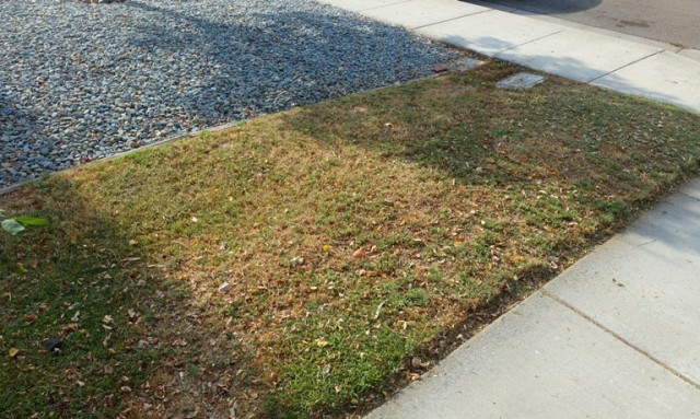 side yard, low water, brown grass