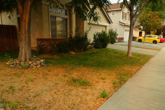 smoky sky, front yard, dying lawn, green grass
