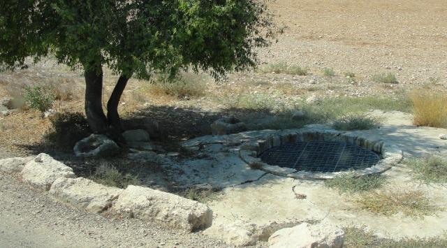 israel, shephelah, bet guvrin, water, tree