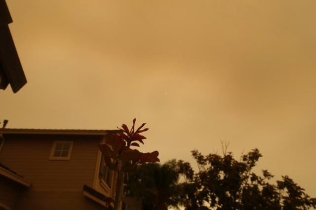 smoke filled sky, wildfires, california