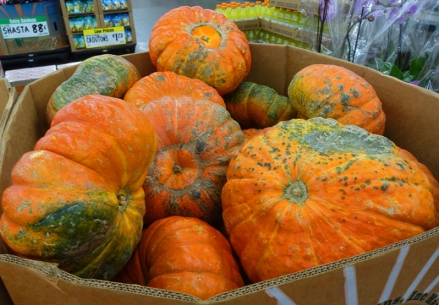 fall, autumn, october, pumpkins, gourds