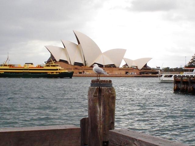 Sydney Opera House, Australia, seagull, harbour