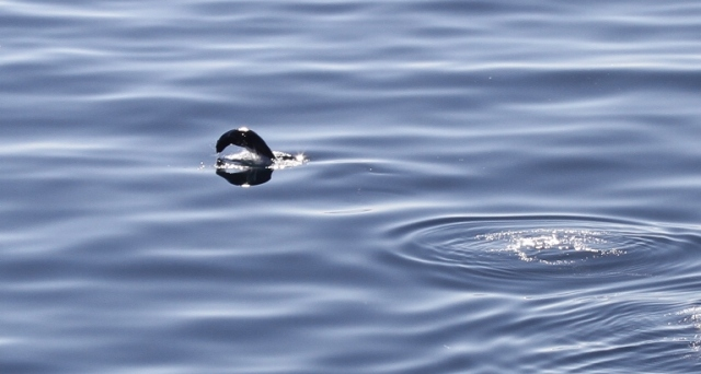 whale watching, antarctica, cruise, cold waters