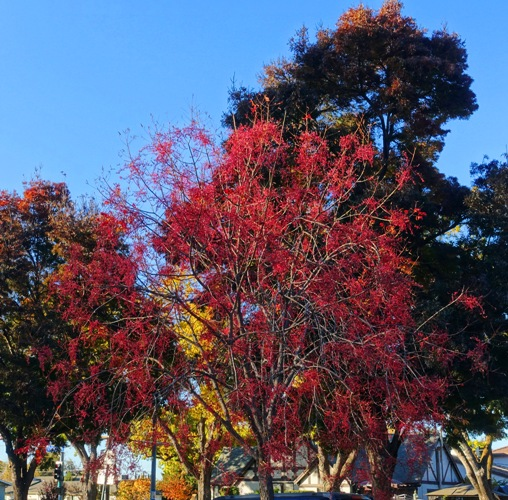 fall color, library, parking lot, autumn color