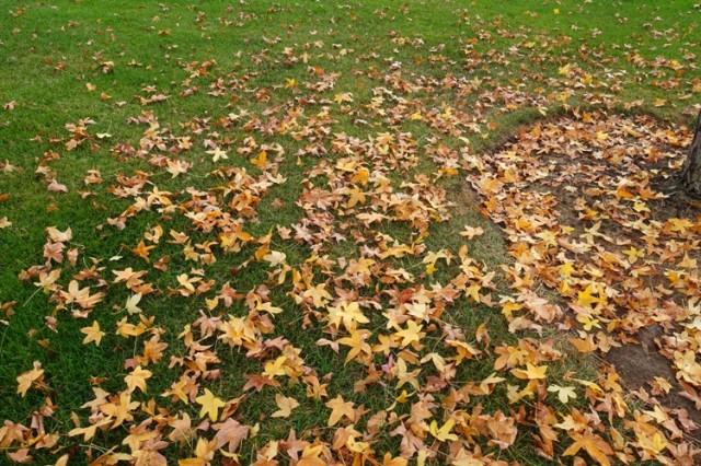 fall leaves, park, leaf scatter