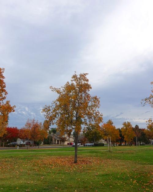 park, fall, autumn, leaves, cloudy sky