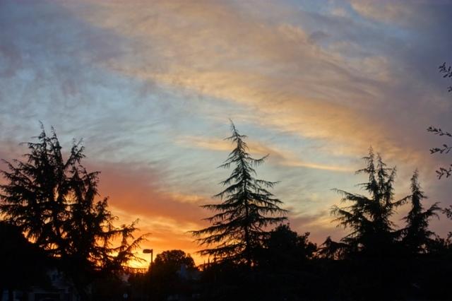 sunset, winter, park