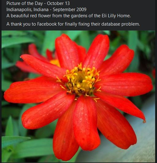 eli lilly home gardens, red flower, picture of the day