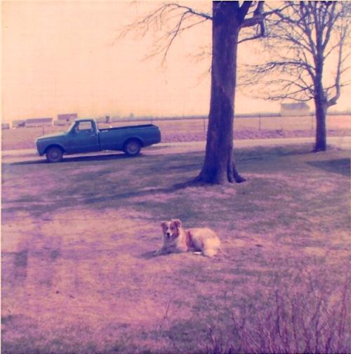 Dog, collie, Ottumwa, blue truck