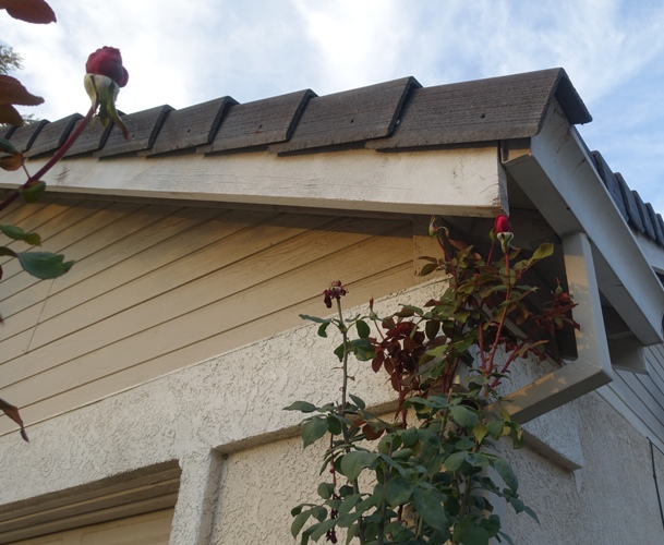 red roses, Mister lincoln rose, tall roses, eaves
