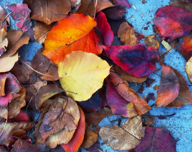 fall, leaves, leaves on sidewalk,, red leaves, autumn