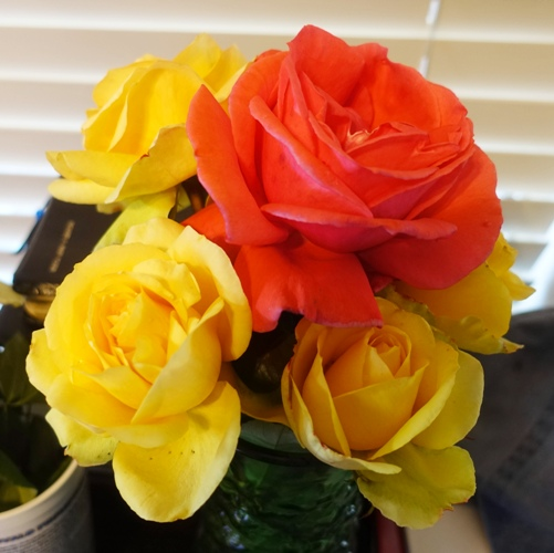 rose bushes, pruning, yellow roses, flower arrangement