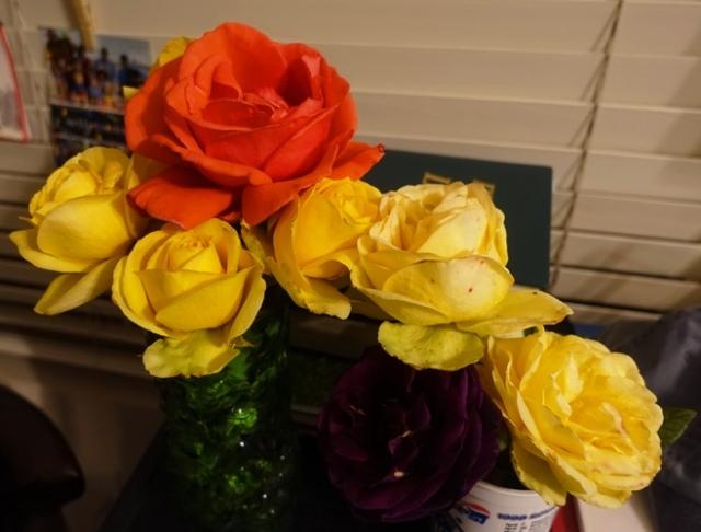 roses, arrangement, pruning roses, leftover roses