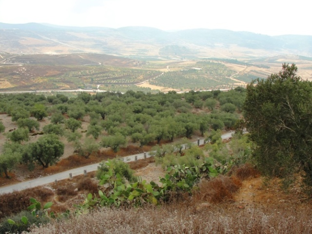 samaria, collonade street, sebaste, israel