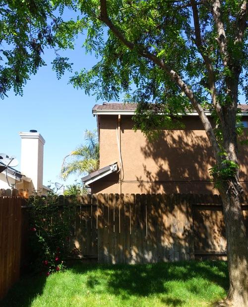 back yard, tree trimming, saws, ladders yard work