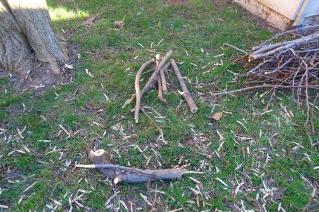 Yard work, limb, tree trimming, limbs, trees