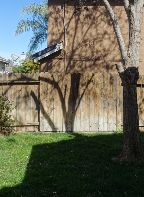 shadows, yard, winter, trees, yard work