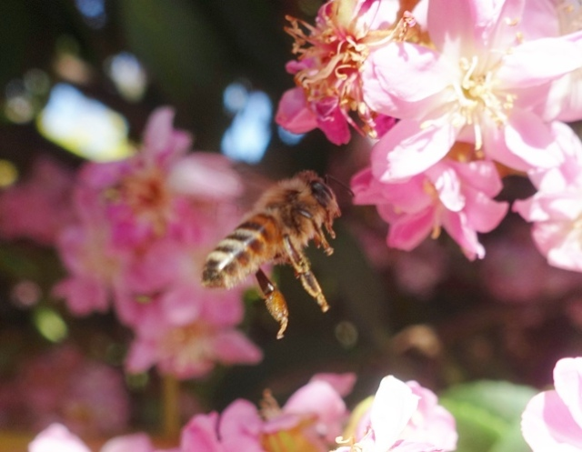 bees, library, bumblebee, honey bee, nature