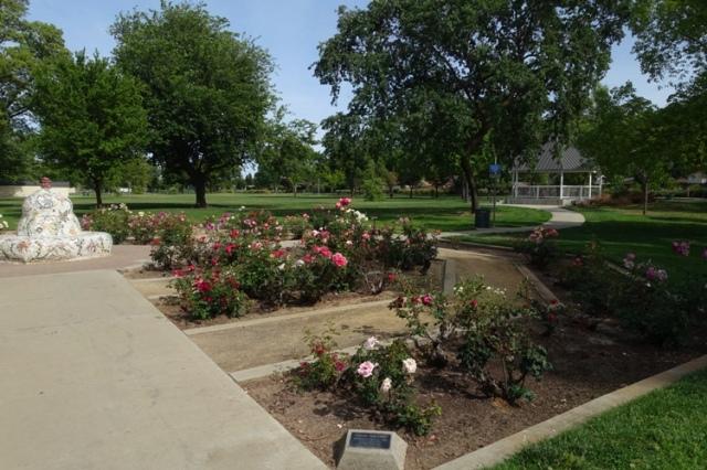 tracy rose garden, garden, library routine