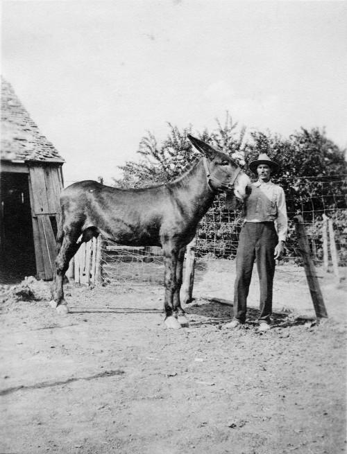 Iowa, Silas Calvin Ramsey, Horse trader, blacksmith, farrier, mule