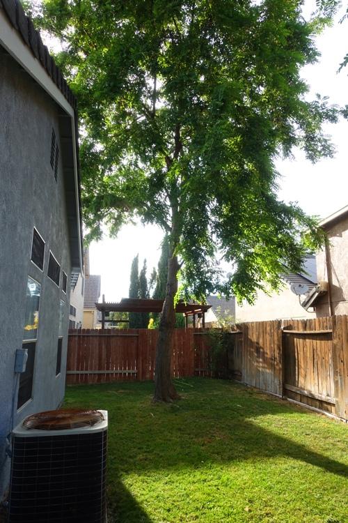 backyard, yard work, mowing, evening
