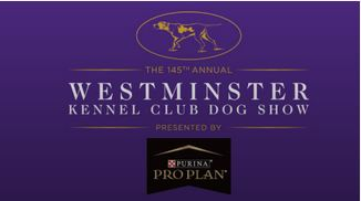 westminster kennel club, dog show, memories
