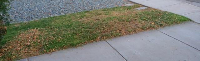 grass, yard work, mowing, front yard, too hot, summer grass