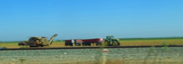 Central Valley, Tomato Harvest, Farming, food, tomato trucks